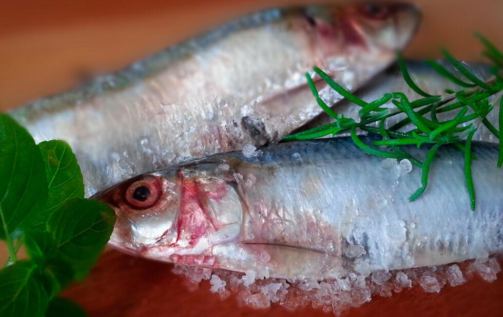 Imagem de peixe sardinha
