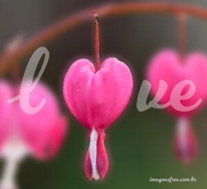 flores e palavras